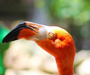 flamingos-curacao-4.jpg